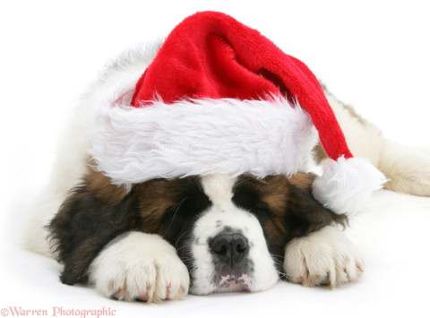 animals & pets fundraising - Wreaths for Rescued Saints