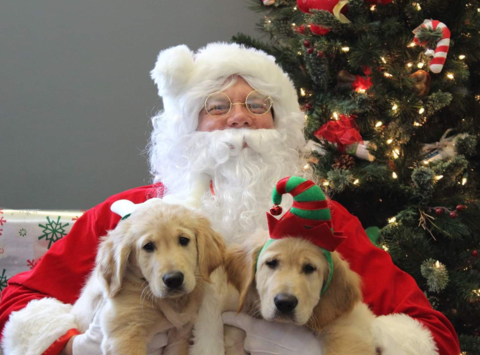 other organization or cause fundraising - Takoda Service Dogs Christmas Fundraiser