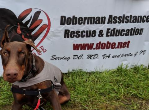 animals & pets fundraising - DAR&E Winter 2018
