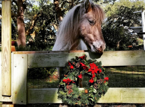 equestrian fundraising - LEARN Horse Rescue's Holiday Hope for Horses