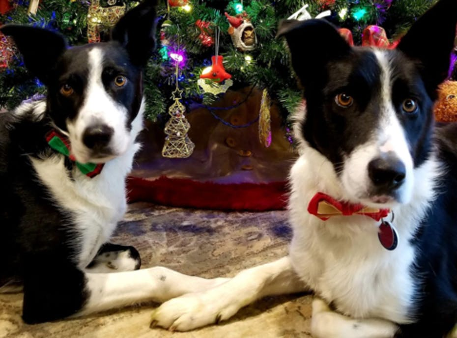 2018 Come Bye Border Collie Rescue Holiday Fundraiser