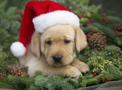 animals & pets fundraising - Wreaths for Wags!
