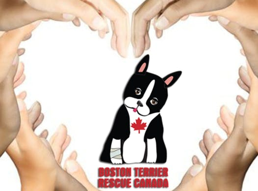 animals & pets fundraising - Boston Terrier Rescue Canada Fundraiser