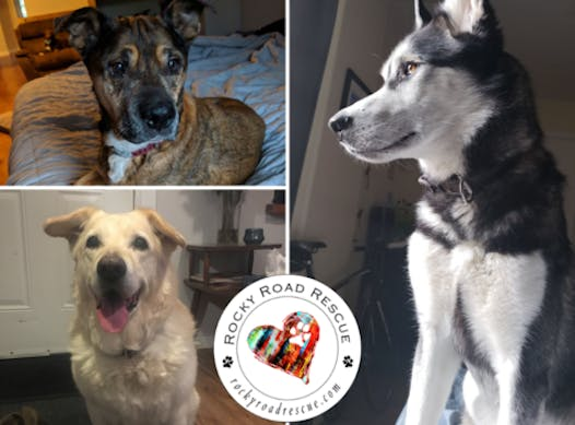 animals & pets fundraising - Rocky Road Dog Rescue