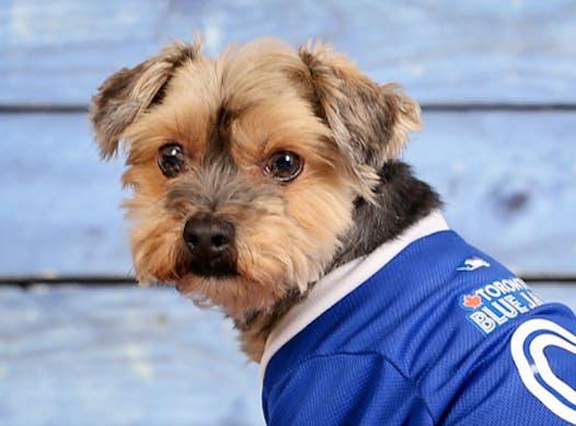 animals & pets fundraising - Mr. Rocky Balboa