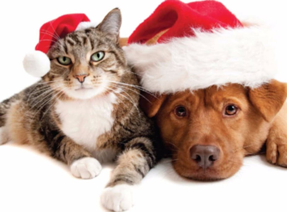 2019 Holiday Fundraiser: Wreaths for Pets