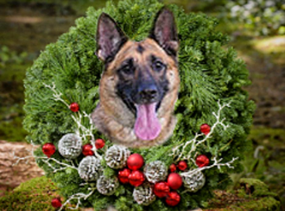 German Shepherd Rescue Holiday Fundraiser