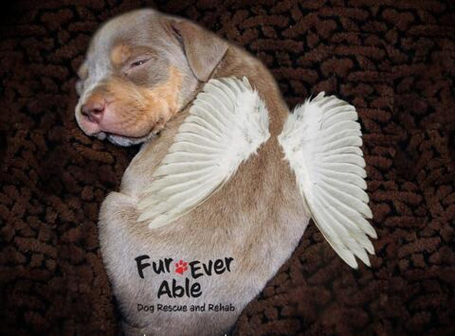 Fur-Ever Able Dog Rescue and Rehab