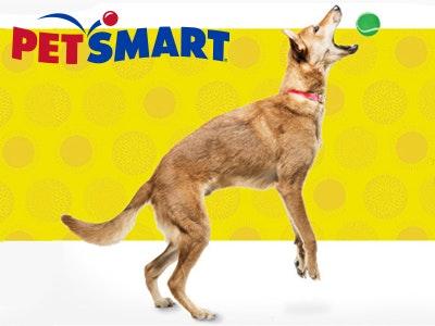 400x300 petsmart1.jpg?ch=width%2cdpr%2csave data&auto=format%2ccompress&dpr=2&format=jpg&w=250&h=187
