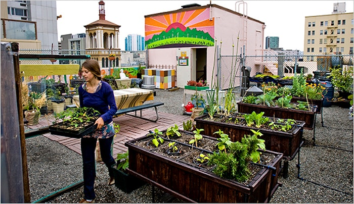 Urban Farming: Getting Your Hands Dirty for A Better Community