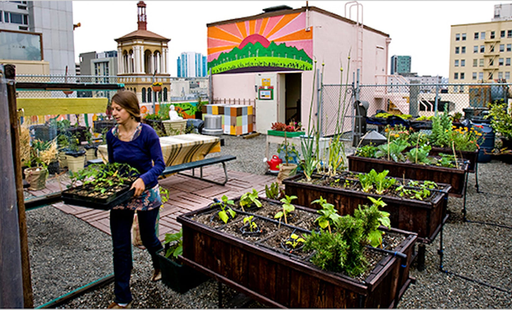 New york times urban farming